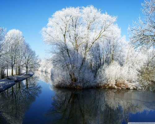 Winter wallpaper containing a riparian forest entitled Winter Wonderland