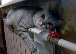 amazing cat pic