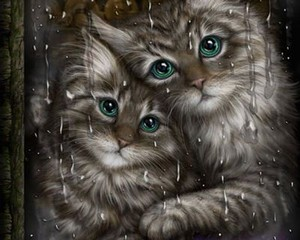 amazing cats pic