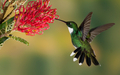 beautiful hummingbird - animals photo
