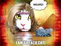 kitty - animal-humor fan art