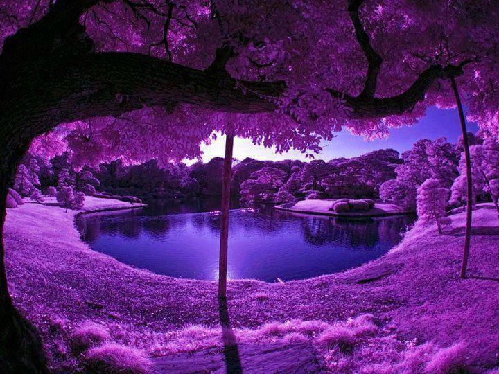purple nature fanpop forest