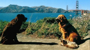 "1996 disney Film, ""Homeward Bound 2: lost In San Francisco"""