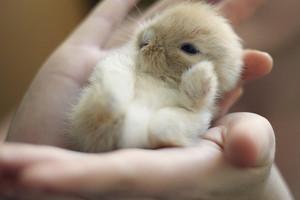 Bouncing baby bunnies.