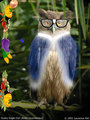 Aunt Sue the Owl