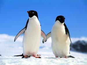 penguin pair holding flippers