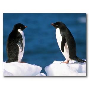 ペンギン faceoff