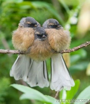 3 birds snuggling together to keep warm
