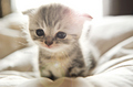 cute cattttttttttttt - cats photo