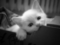 cute cattttttttttttttttttttttttt - cats photo