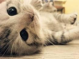 cute cattttttttttttt
