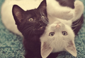 cute catcute cattttttttttttt - cats photo