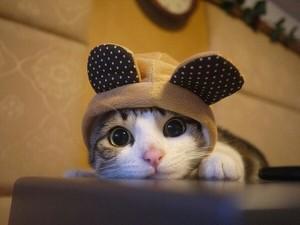 cute catttttttttttttt