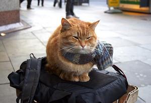 Feline Celebrity, Bob The Cat