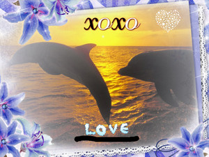 dolfijn Love