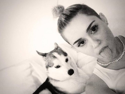 Miley Cyrus wallpaper possibly with a siberian husky entitled Floydyy