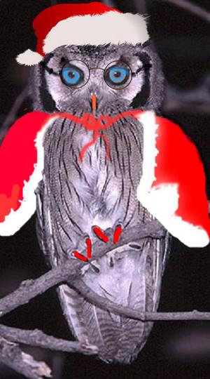 Harriet in a santa suit
