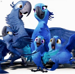 Blue birds' family - Rio