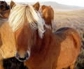 Horses - animals photo