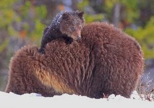 Mama & baby orso