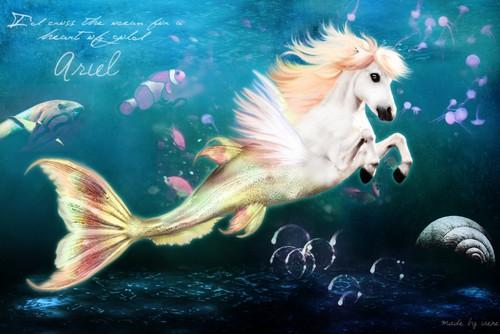 Mermaids wallpaper called Merhorse is coll