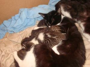 My cat and gatinhos