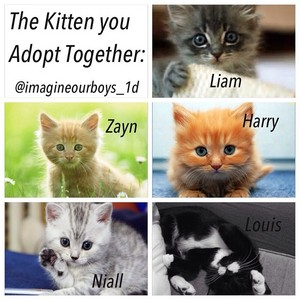 the kitten you adopt together