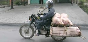 Pigs on a Motorcycle