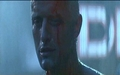 Rutger - blade-runner photo