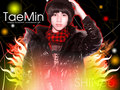 SHINee Taemin Wallpaper  - shinee wallpaper