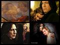 Severus and Hermione - severus-snape fan art