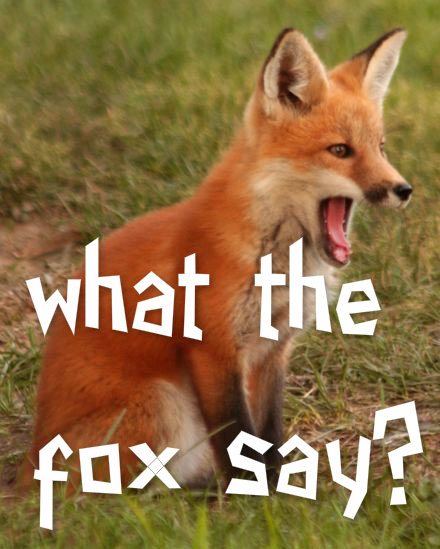 what the fox say A surreal video from norweigian comedy duo ylvis, the fox, has become the hottest (and strangest) end-of-summer-jam on the internet, racking up over four.