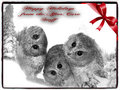 aftercare christmas card