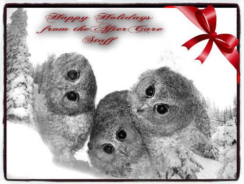Owls fond d'écran entitled aftercare christmas card