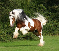 beautiful horse - horses photo