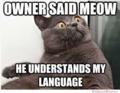হাঃ হাঃ হাঃ cat