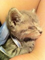 KITTEN BACKPACK - animals photo