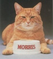 9 Lives Commerical Featuring Morris The Cat - cats photo