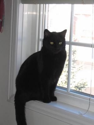 Black Cat Sitting On A Window Sill