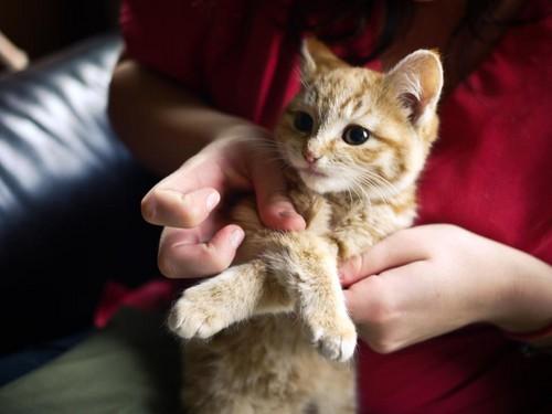 Lucycat Hd