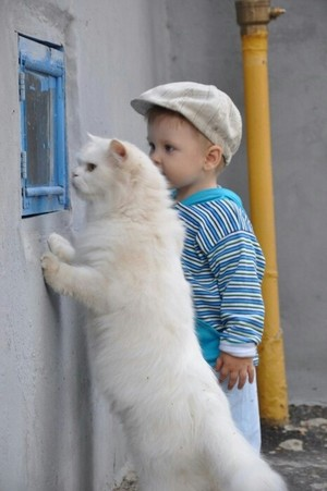 ..Cute Cat..