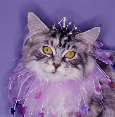 Cats wallpaper containing a tabby and a tabby titled Princess Kitty