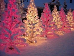 Weihnachten trees