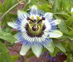 fleur Power