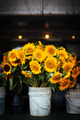 Sunflowers - flowers photo