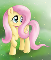Fluttershy Blushing - fluttershy photo