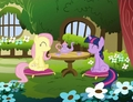 Fluttershy and Twilight Sparkle - fluttershy photo
