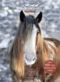 Winter Horse - horses photo