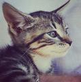 Liz's Cat <3