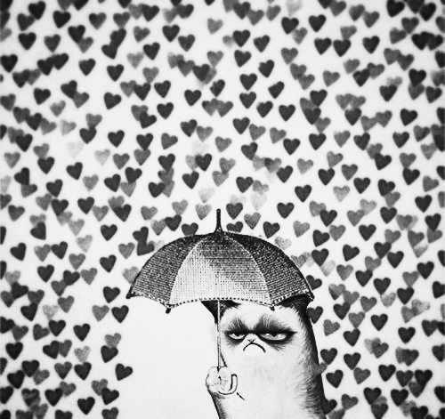 Meme Fondo De Pantalla With A Parasol Called Grumpy Cat